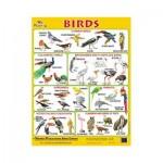 Wall Chart Birds