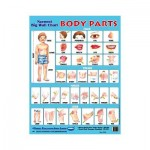 Wall Chart Body Parts