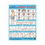 Wall Chart Body Parts